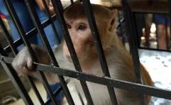 monkey_650x400_71454702450
