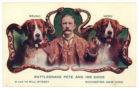 rattlensnake-and-hid-dogs